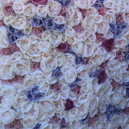 La Vie De La Rose Infinity Rosen Rosenboxen